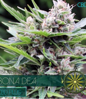 Bona Dea CBD+ by Vision Seeds