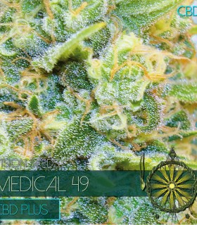 Medical 49 CBD+ by Vision Seeds