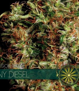 NY Diesel by Vision Seeds