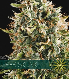 Super Skunk by Vision Seeds