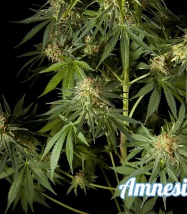 Amnesika 2.0