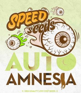 Amnesia Auto by Speed Seeds