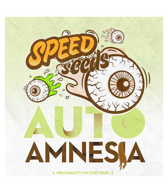 Amnesia Auto