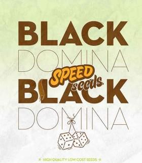 Black Domina x Black Domina by Speed Seeds