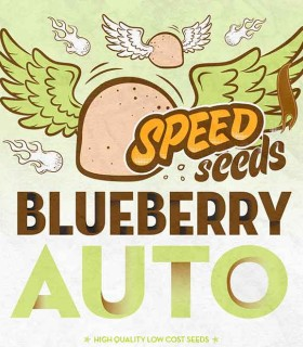 Blueberry Auto by Speed Seeds