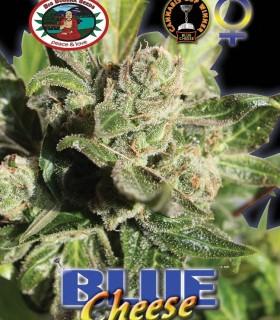 Big Buddha Seeds Blue Cheese by