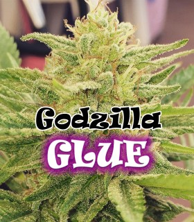 Godzilla Glue by Dr. Underground Seeds
