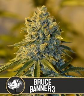 Blimburn Seeds Bruce Banner 3 by