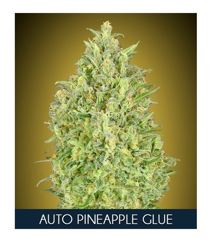 Auto Pineapple Glue