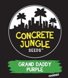 Grand Daddy Purple by Concrete Jungle Seeds