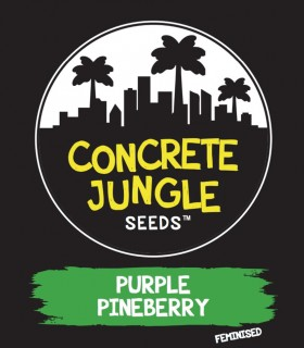 Purple Pineberry