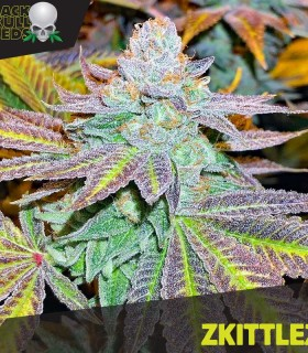 Zkittelz by Black Skull Seeds