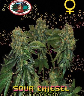 Sour Chiesel Automatic