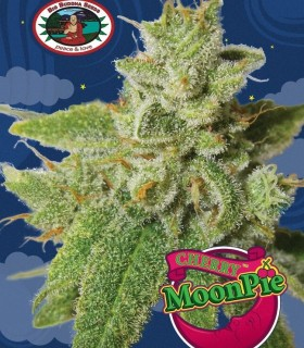 Cherry Moon Pie