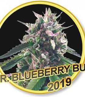 Mr. Blueberry Bud