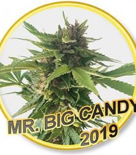 Mr. Big Candy