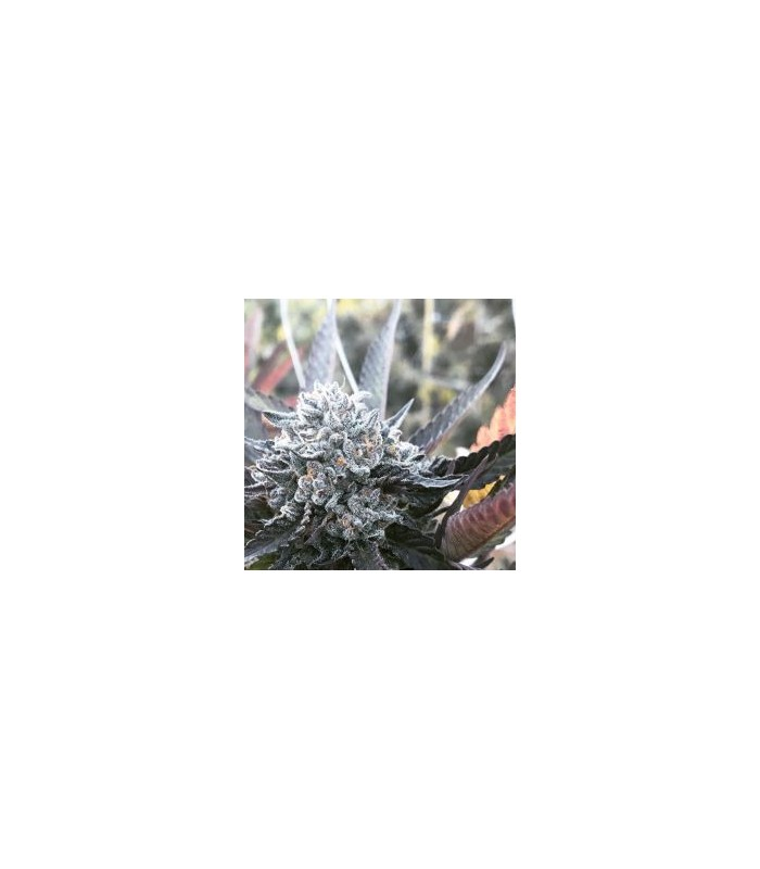 Fruit Flambe
