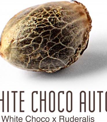 White Choco Auto