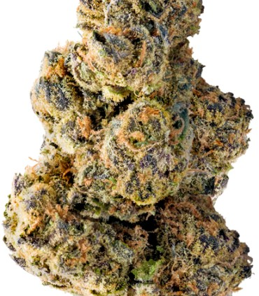 Colossal Purps
