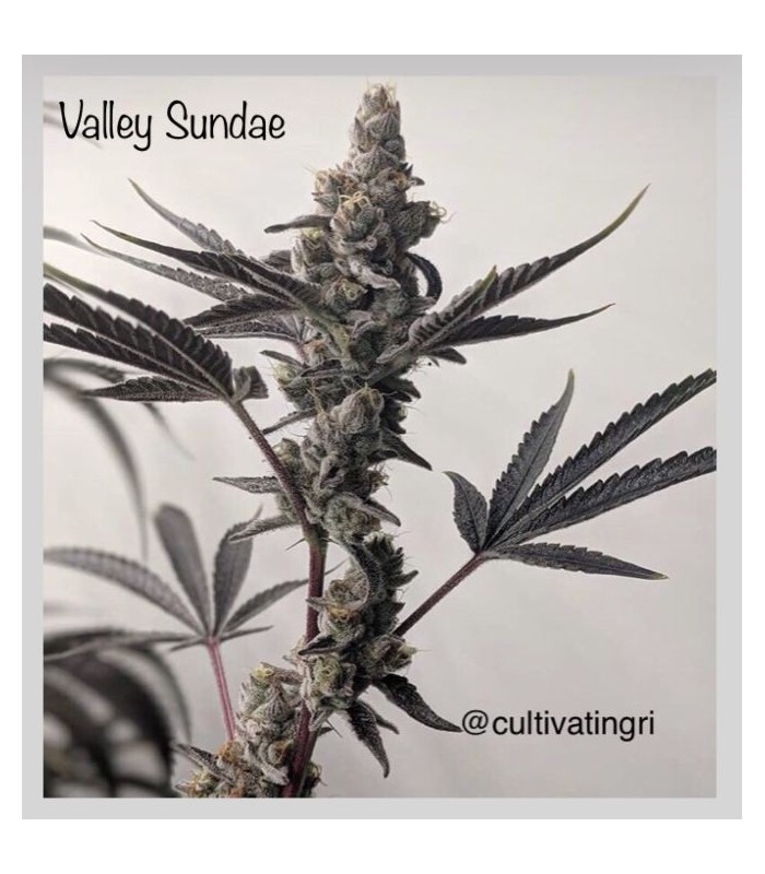 Valley Sundae