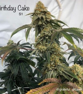 Birthday Cake S1
