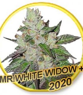 Mr White Widow +
