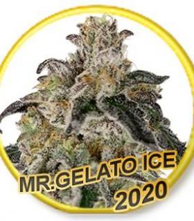 Mr Gelato Ice