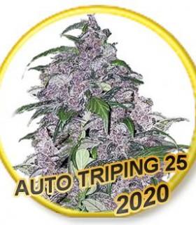 Auto Triping 25