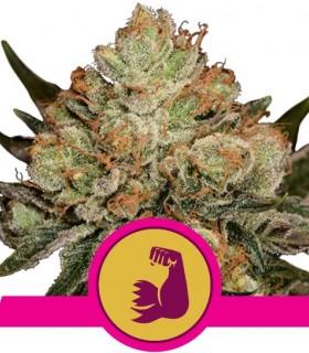 Royal Queen Seeds HulkBerry