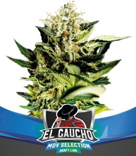 El Gaucho Fast Version