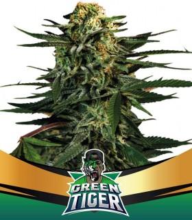 Green Tiger Fast Version