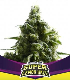 SLH - Super Lemon Haze