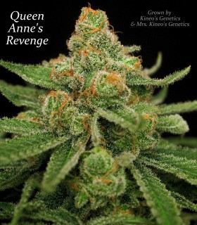 Queen's Anne Revenge