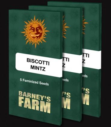 Biscotti Mintz by Barney's Farm