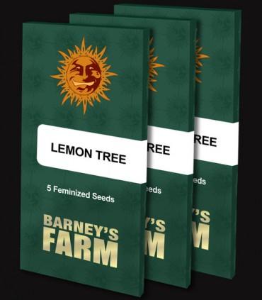 Lemon Tree by Barney's Farm Seeds