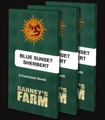 Blue Sunset Sherbert by Barney's Farm Seeds