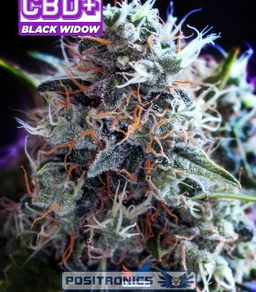 CBD + Black Widow