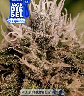 Jack Diesel Express