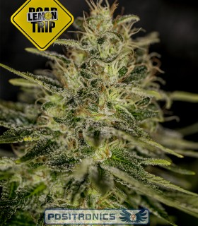 Lemon Trip