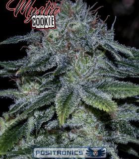 Mystic Cookie