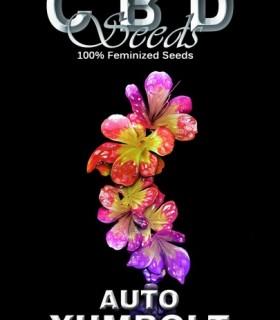 Auto Yumbolt by CBD Seeds