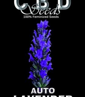 Auto Lavender by CBD Seeds