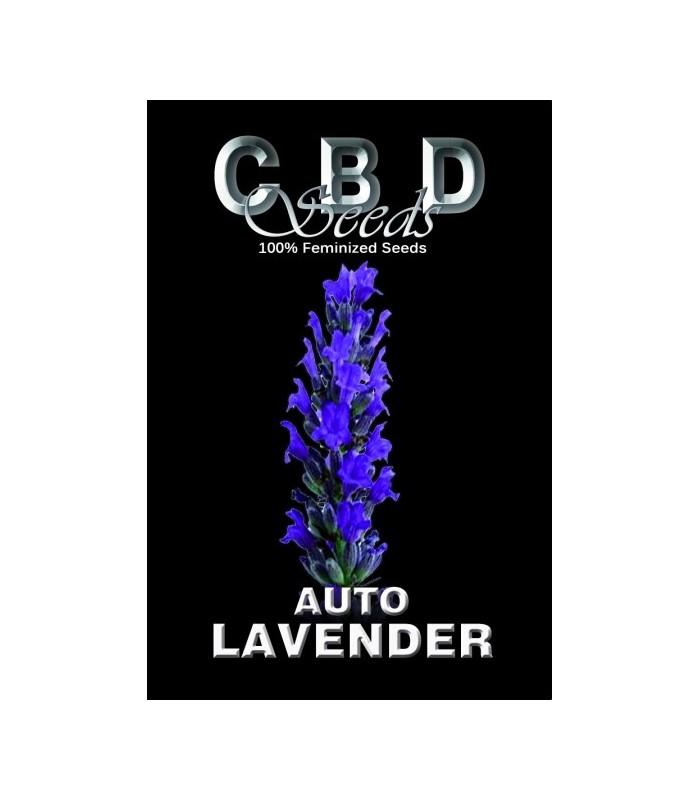 Auto Lavender