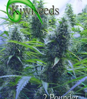 2 Pounder by Kiwi Seeds