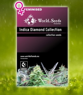Indica Diamond Collection by World of Seeds