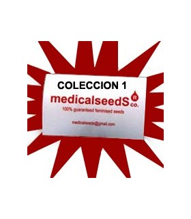 Coleccion 1 by Medical Seeds