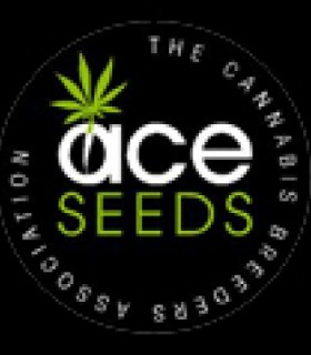 Nepal Haze by Ace Seeds