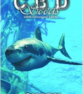 Shark by CBD Seeds