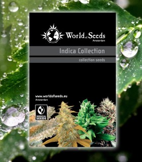 Indica Collection by World of Seeds