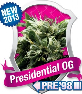 Presidential OG by Royal Queen Seeds